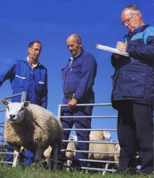 Bí quyết làm đẹp với viên dưỡng da nhau thai cừu
